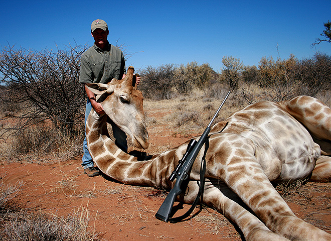 Giraffe Trophy Hunting Makadi Safaris